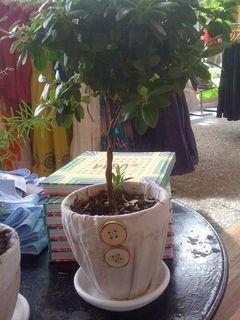 Plantinpot2