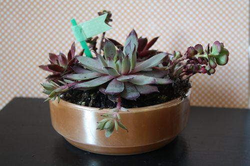 Succulents16