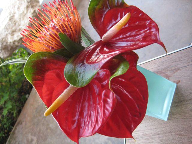 Aulani Flowers
