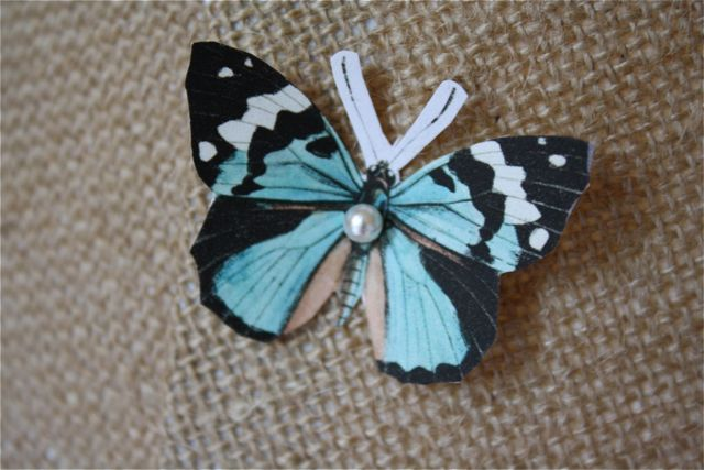 Butterfly specimen lamp blue butterfly