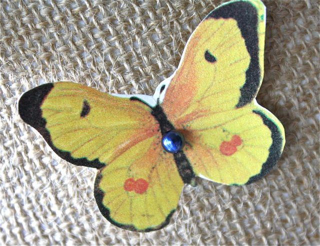 Butterfly specimen yellow