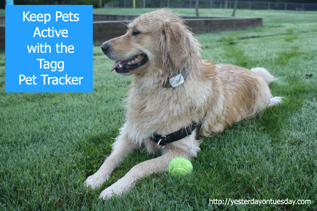 Tagg Pet Tracker Product