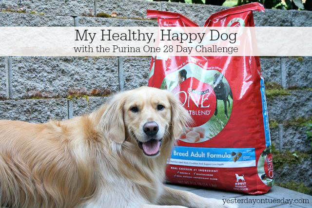 Take the Purina One 28 Day Challenge