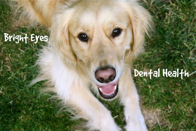 Τα λαμπερά μάτια...