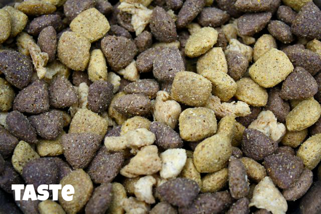 Get Purina One for your dog and do the 28 Day Challenge