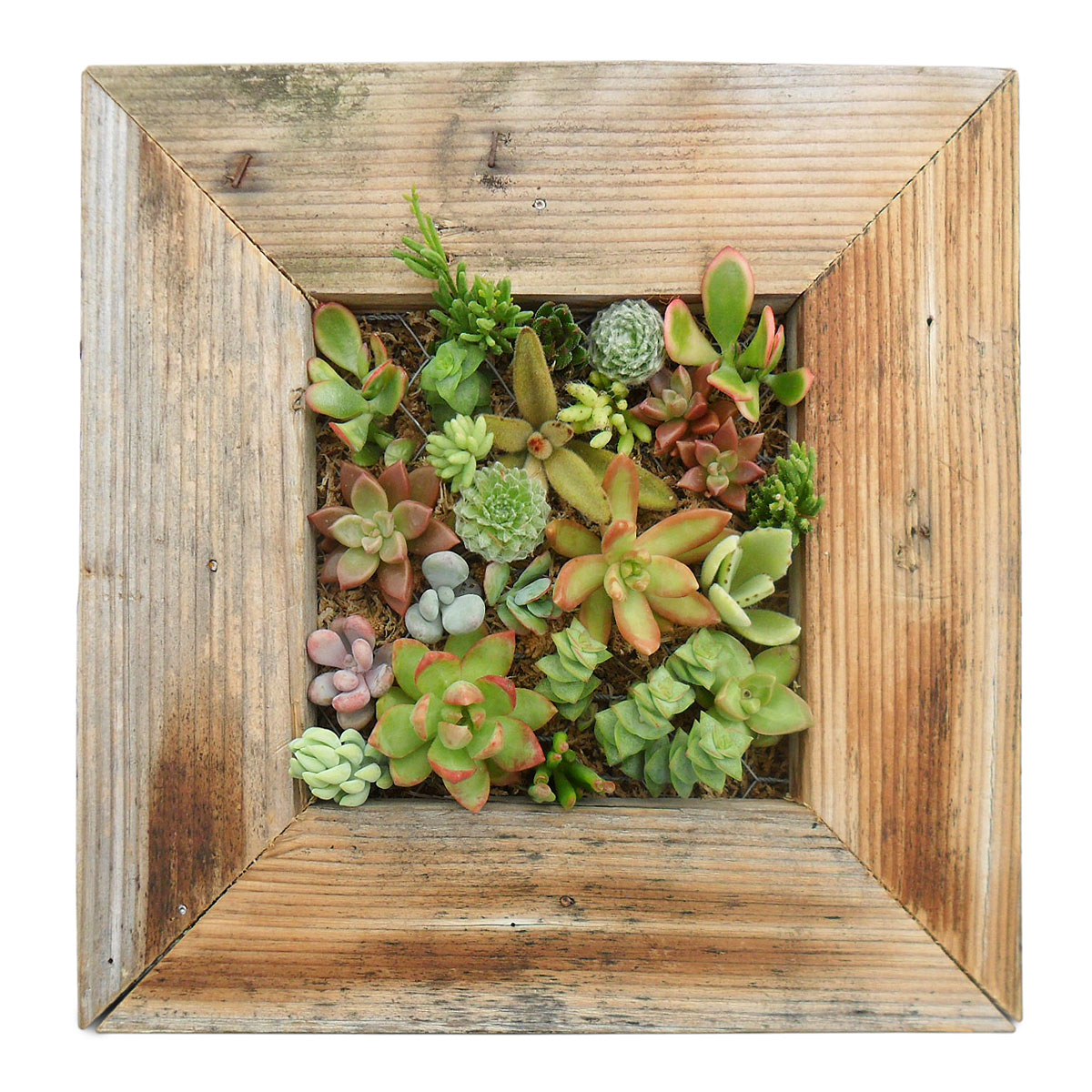 Picking the perfect gift with uncommongoods for Living wall planter