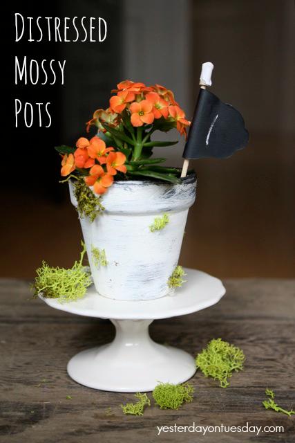 Mossy Flower Pots