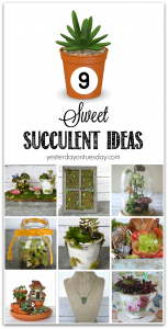 Sweet Succulent Ideas for both real and faux succulent plants. Decor and gift ideas.