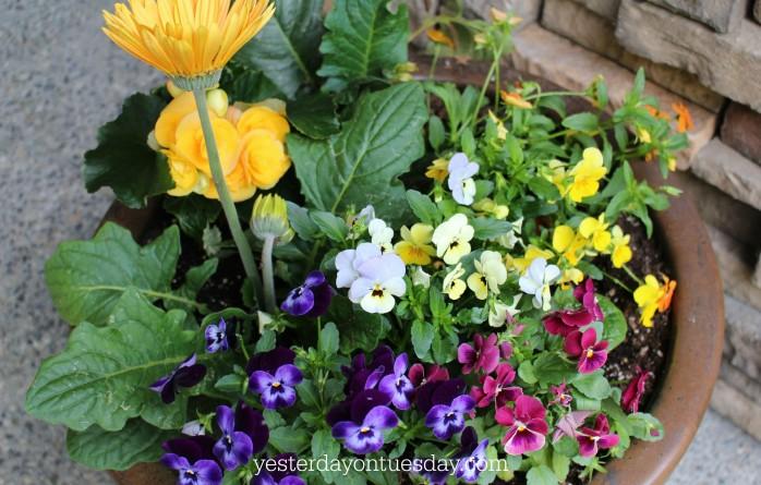 Filled in Flower Pot