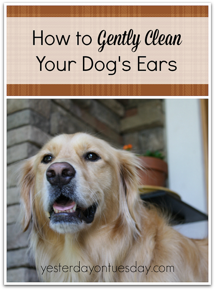 How to clean your dog's ears with things you already have at home