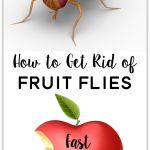 How to Get Rid of Fruit Flies: Use stuff you already have at home send these pesky pests packing!