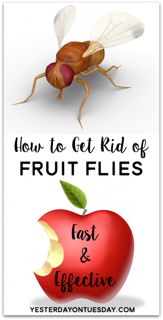 Cider Press For Sale >> How to Get Rid of Fruit Flies | Yesterday On Tuesday