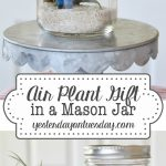Air Plant Gift in a Mason Jar with printable tags for for any occasion including gift giving, Get Well Soon, Thinking of You, Thank You and more!
