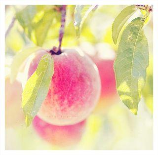 Chic Thursday: Peachy Keen