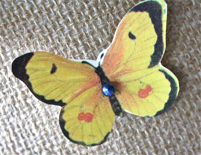 Butterfly specimen yellow