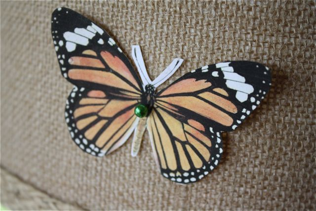 Butterfly specimen lamp orange butterfly
