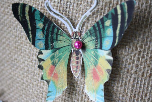 Butterfly specimen green