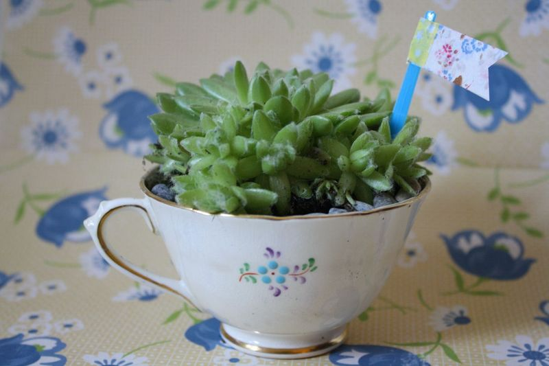 Pretty Succulents - #yesterdayontuesday #succulents