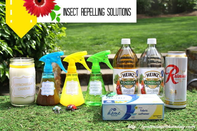 How to repel insects