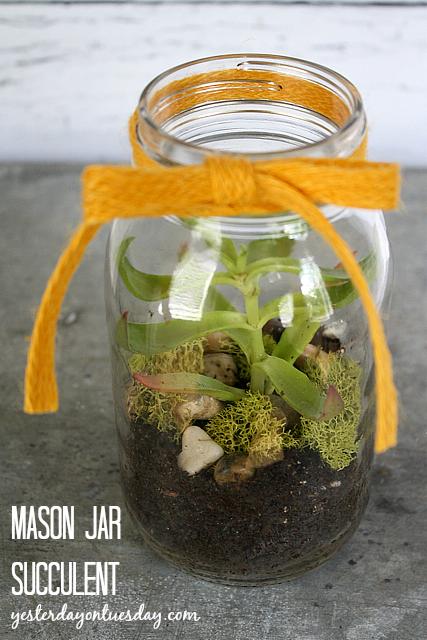 Mason Jar Succulent