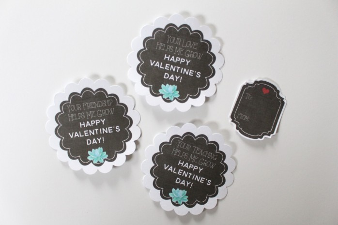 Valentine's Day Succulent Gift Labels and Tags: Cute chalkboard labels and tags for friends, teachers and loved ones. Just add succulents!