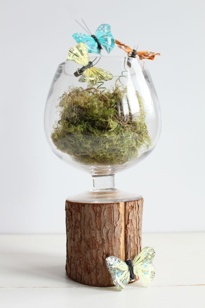 DIY Butterfly Terrarium
