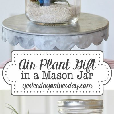 Air Plant Gift in a Mason Jar with Printables