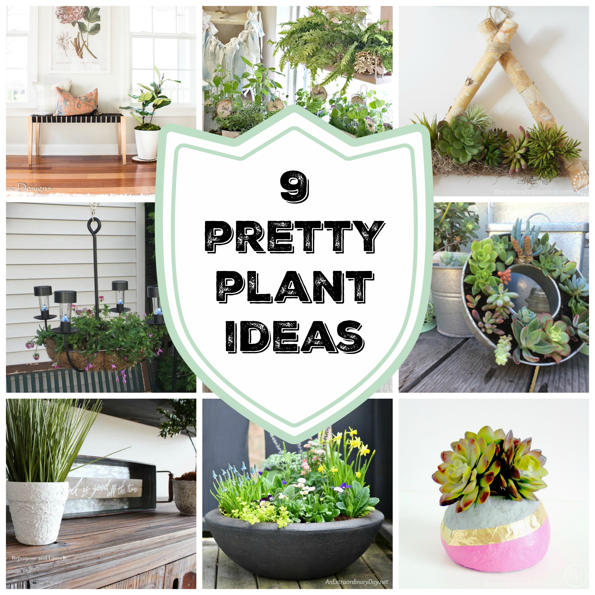 9 Pretty Plant Ideas